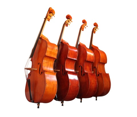 Group-of-basses
